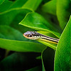 Maker:  Wayne Tabor<br /> Title:  Peek-a-boo Snake<br /> Category:  Macro/Close Up<br /> Score:  12