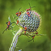 Maker:  Wayne Tabor<br /> Title:  Red Bug Ball<br /> Category:  Macro/Close Up<br /> Score:  13