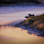 Maker:  Wayne Tabor<br /> Title:  Moose on Misty Point<br /> Category:  Pictorial<br /> Score:  12
