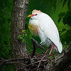 Maker:  Dwayne Anders<br /> Title:  Egret Nest<br /> Category:  Wildlife<br /> Score:  13