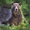 Maker:  Wayne Tabor<br /> Title:  Birthday Bear<br /> Category:  Wildlife<br /> Score:  13