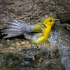 Maker:  Dale Lindenberg<br /> Title:  Yellow Bird<br /> Category:  Wildlife<br /> Score:  13
