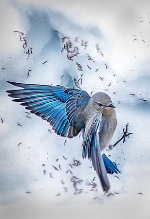 Maker:  Dale Lindenberg<br /> Title:  Blue Bird<br /> Category:  Pictorial<br /> Score:  12