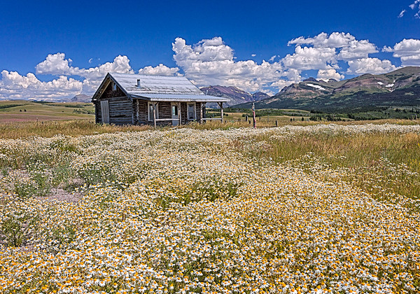 Maker:  Wayne Tabor<br /> Title:  Native Hut in Flowers<br /> Category:  Pictorial<br /> Score:  12