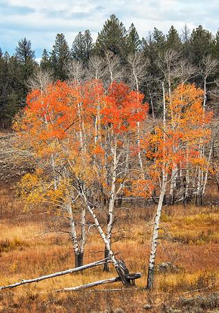 Maker:  Wayne Tabor<br /> Title:  Last Color of Autumn<br /> Category:  Landscape/Travel<br /> Score:  12