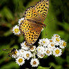 Maker:  Wayne Tabor<br /> Title:  Sharing the Sweet<br /> Category:  Macro/Close Up<br /> Score:  15