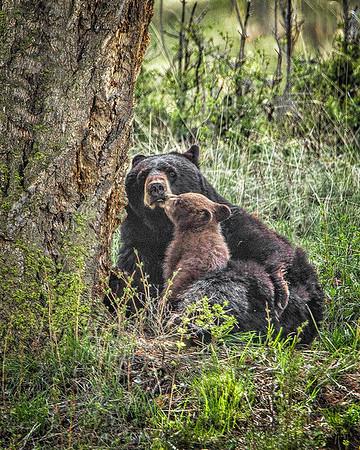 Maker: Wayne Tabor<br />  Title:  Cuddling Mom<br /> Category:  Wildlife<br /> Score:  14