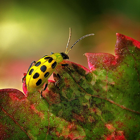 Maker:  Wayne Tabor<br /> Title:  Ladybug, Ladybug<br /> Category:  Pictorial<br /> Score:  15