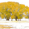 Maker:  Wayne Tabor<br /> Title:  Gold in the Snow<br /> Category:  Pictorial<br /> Score:  13