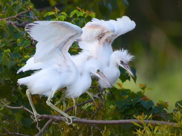 Maker:  Debbie Oxner<br /> Title:  Look Mom I'm flying<br /> Category:  Wildlife<br /> Score:  12