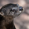 Maker:  Dwayne Anders<br /> Title:  Otter<br /> Category:  Pictorial<br /> Score:  11