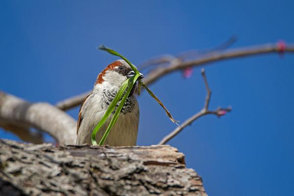 Maker:  Ouida Salter<br /> Title:  Nesting Time<br /> Category:  Wildlife<br /> Score:  11