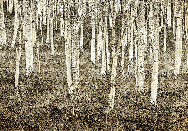 Maker:  Wayne Tabor<br /> Title:  A Quiet Woods<br /> Category:  Black & White<br /> Score:  13