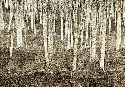 Maker:  Wayne Tabor Title:  A Quiet Woods Category:  Black & White Score:  13