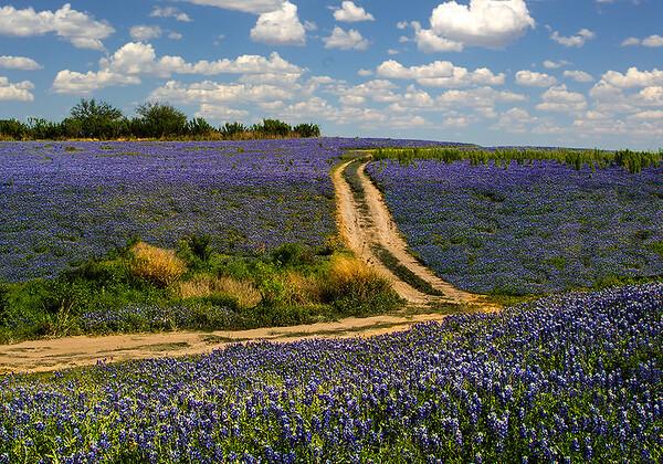 Maker:  Dale Lindenberg<br /> Title:  Field of Bluebonnetts<br /> Category:  Landscape/Travel<br /> Score:  13