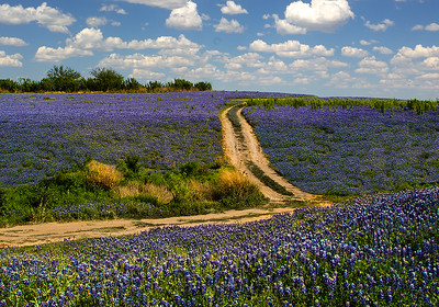Maker:  Dale Lindenberg Title:  Field of Bluebonnetts Category:  Landscape/Travel Score:  13