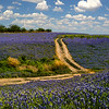 Maker:  Dale Lindenberg<br /> Title:  Field of Bluebonnetts<br /> Category:  Landscape/Travel<br /> Score:  13