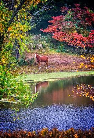 Maker:  Dale Lindenberg<br /> Title:  Horse on Tranquil Pond<br /> Category:  Pictorial<br /> Score:  12