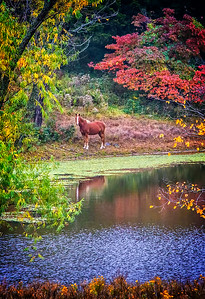 Maker:  Dale Lindenberg Title:  Horse on Tranquil Pond Category:  Pictorial Score:  12