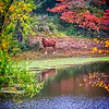 Maker:  Dale Lindenberg<br /> Title:  Horse on Tranquil Pond<br /> Category:  Pictorial<br /> Score:  12
