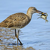 Maker:  Mike Smith<br /> Title:  Shortbilled Dowincher and Crab<br /> Category:  Wildlife<br /> Score:  14