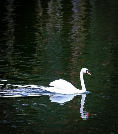 Maker:  Linda Holloway<br /> Title:  Tweed Swan<br /> Category:  Wildlife<br /> Score:  12