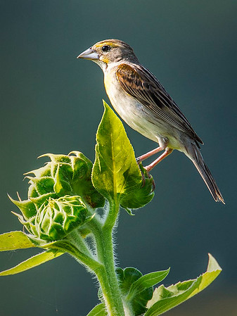 Maker:  Dwayne Anders<br /> Title:  Cairo Farm Bird<br /> Category:  Wildlife<br /> Score:  13