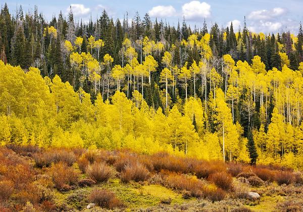 Maker:  Wayne Tabor<br /> Title:  Aspen Ridge<br /> Category:  Landscape/Travel<br /> Score:  12