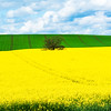 Maker:  Linda Holloway<br /> Title:  Linseed Field<br /> Category:  Landscape/Travel<br /> Score:  13