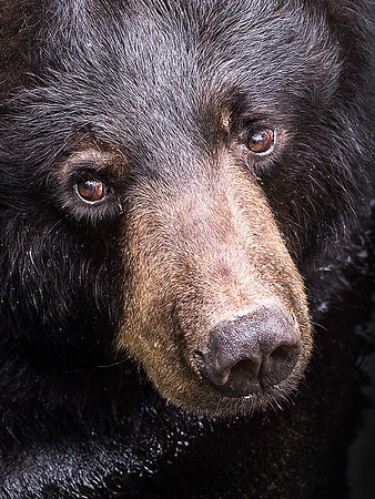 Maker:  Dwayne Anders<br /> Title:  Big Bear<br /> Category:  Pictorial<br /> Score:  14