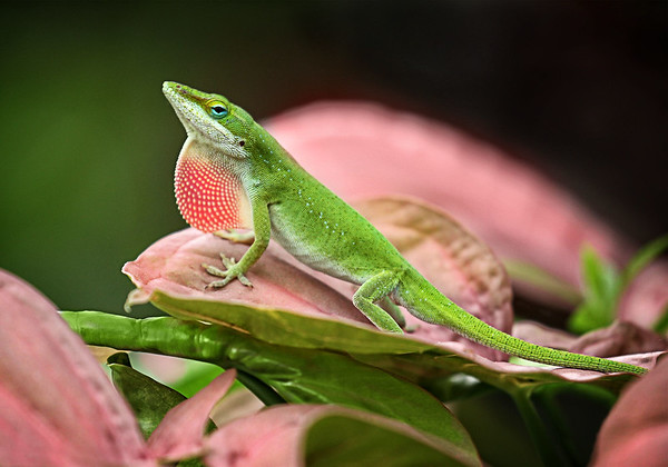 Maker:  Wayne Tabor<br /> Title:  Showing His Colors<br /> Category:  Macro/Close Up<br /> Score:  13