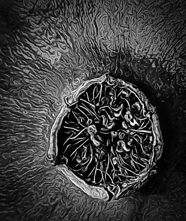 Maker:  Linda Holloway<br /> Title:  Pomegranate Study B&W<br /> Category:  Black & White<br /> Score:  11