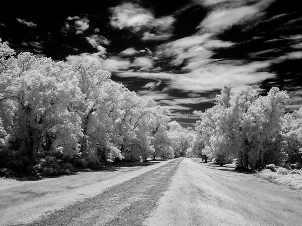 Maker:  Jim Lawrence<br /> Title:  Levee Road<br /> Category:  Black & White<br /> Score:  15