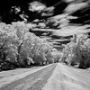 Maker:  Jim Lawrence<br /> Title:  Levee Road<br /> Category:  Black & White<br /> Score:  15