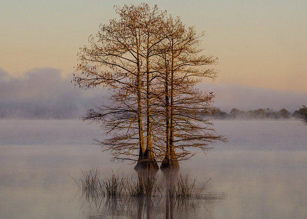 Maker:  Ted Miot<br /> Title:  Twin Cypress<br /> Category:  Landscape/Travel<br /> Score:  12