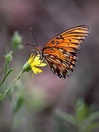 Maker:  Dwayne Anders<br /> Title:  Butterfly<br /> Category:  Wildlife<br /> Score:  13