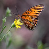 Maker:  Dwayne Anders<br /> Title:  Butterfly<br /> Category:  Wildlife<br /> Score:  13