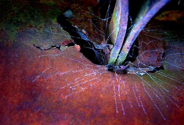 Maker:  Roger Hinton<br /> Title:  Spider Hole<br /> Category:  Altered Reality<br /> Score:  12