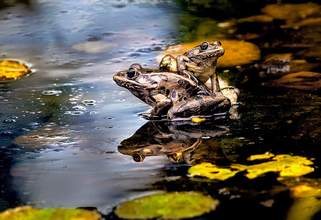 Maker:  Dale Lindenberg Title:  The Frog Pond Category:  Pictorial Score:  12
