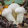 Maker:  Jim Lawrence<br /> Title:  Emerging Mushrooms<br /> Category:  Macro/Close Up<br /> Score:  11