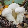 Maker:  Jim Lawrence<br /> Title:  Emerging Mushrooms<br /> Category:  Macro/Close Up<br /> Score:  11