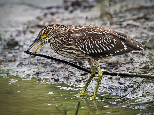 Maker:  Dwayne Anders<br /> Title:  Nest Builder<br /> Category:  Wildlife<br /> Score:  14