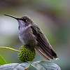 Maker:  Dirk J. Sanderson<br /> Title:  Hummingbird at Rest<br /> Category:  Pictorial<br /> Score:  11