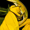 Maker:  Dale Lindenberg<br /> Title:  Lizard<br /> Category:  Macro/Close Up<br /> Score:  11