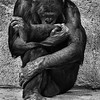 Maker:  Dale Lindenberg<br /> Title:  Thinker<br /> Category:  Black & White<br /> Score:  13