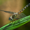Maker:  Don Angle<br /> Title:  Dragonfly<br /> Category:  Macro/Close Up<br /> Score:  12