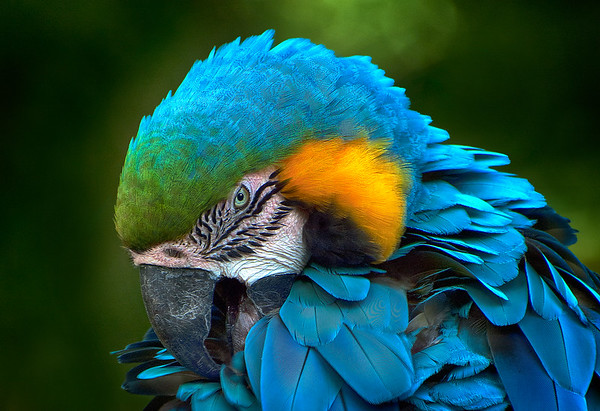 Maker:  Roger Hinton<br /> Title:  Macaw<br /> Category:  Pictorial<br /> Score:  13