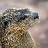 Maker:  Dwayne Anders<br /> Title:  Sand Otter<br /> Category:  Pictorial<br /> Score:  13
