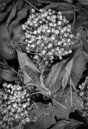 Maker:  Roger Hinton<br /> Title:  Dried Organics<br /> Category:  Black & White<br /> Score:  12