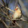Maker:  Danny Haddox<br /> Title:  Momma Redbird<br /> Category:  Wildlife<br /> Score:  11